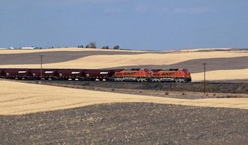 BNSF grain train crop
