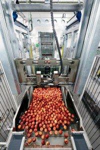 Apple dumpers streamline the pre-packaging process.